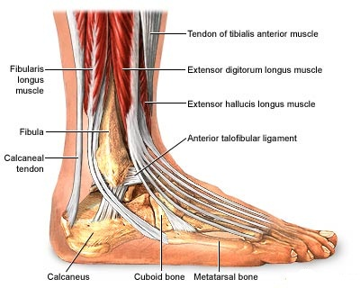 Foot Tendon Injury Healthcare Online