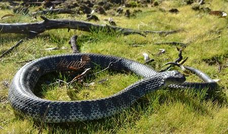 Snake Bite Poisoning | Healthcare-Online - photo#32